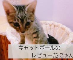 【木登りキャットポール】レビュー。子猫は登れるの?これから猫を飼いたい方必見!